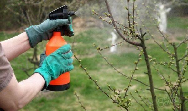 Весенняя обработка деревьев фунгицидами