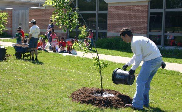 Химическая обработка деревьев от тли