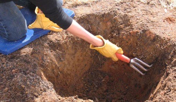 Готовим посадочную яму для сливы
