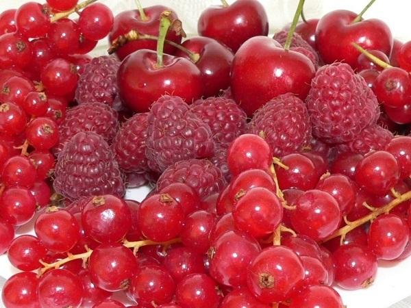14 к�а�н� ягод названия и вид� де�ев�я � к�а�н�ми ягодами