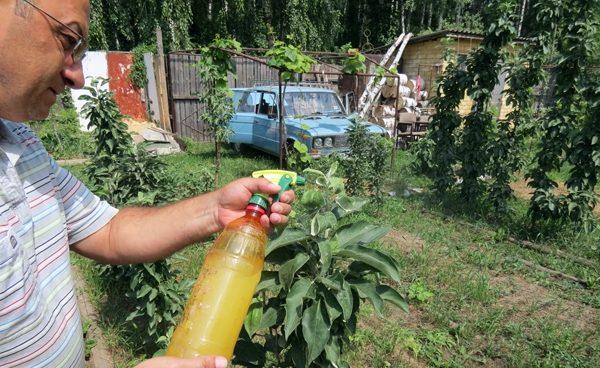 Народные средства для борьбы с тлей на плодовых деревьях