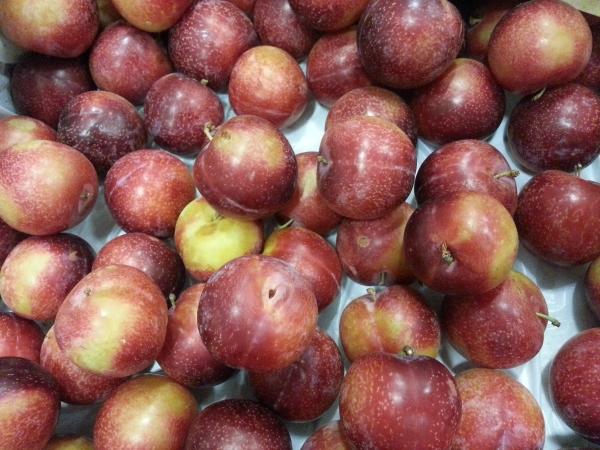 Плоды алычи применяют в лечебно-профилактических целях при длительных запорах, авитаминозе, нарушениях обмена веществ