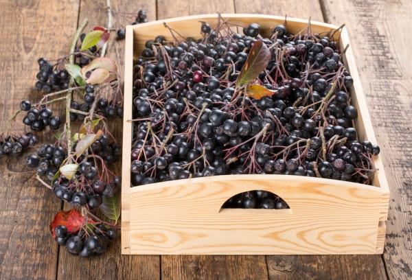 Для готовки варенья и компотов ягоду нужно собирать с конца сентября, ближе к середине октября