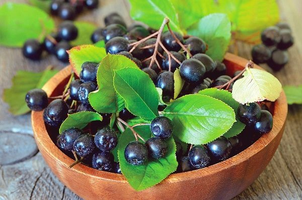 Урожай свежих ягод черноплодной рябины