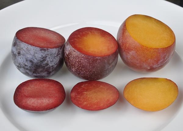Самые необычные гибриды абрикоса, персика, сливы и яблока, их описание, достоинства и недостатки