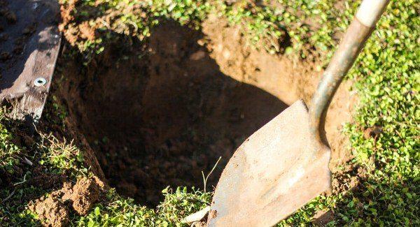 Подготовка ямы для посадки вишни