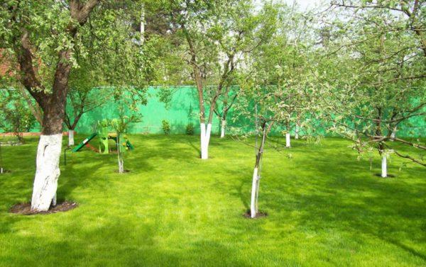 Размещение плодовых деревьев в саду