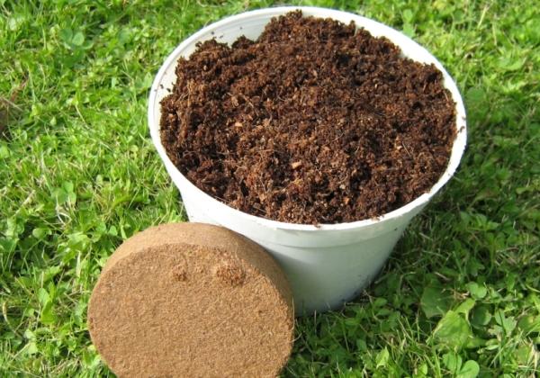 Стратификация - выдерживание посадочного материала в холодных и влажных условиях, которое позволяет прорастить косточку