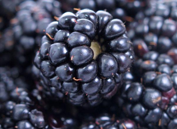 Состав, полезные свойства и противопоказания ежевики, медицинские и кулинарные рецепты