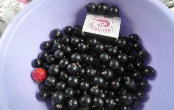 Размеры спелых ягод смородины Пигмей