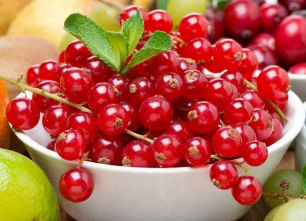 Красная смородина Сахарная: описание сорта и характеристика