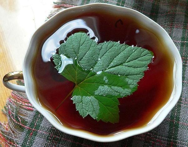 Чай из листьев смородины обладает тонизирующим эффектом