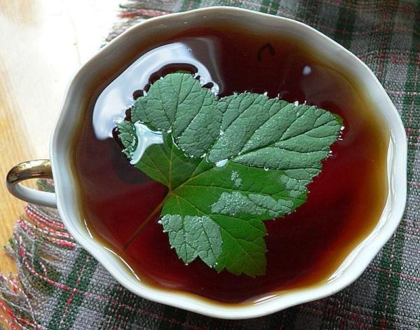 Как из листьев смородины сделать чай