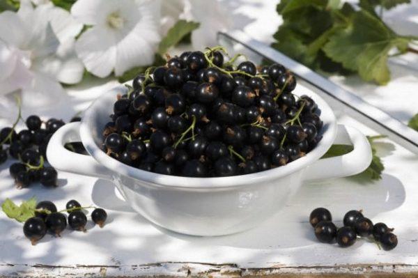 Свежий урожай смородины Пигмей