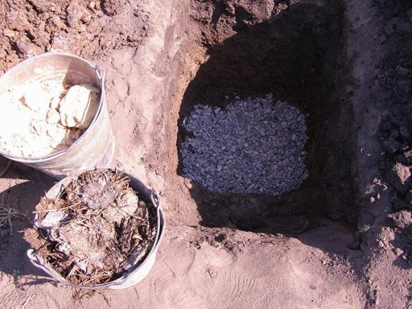 Весной или осенью подготавливают яму для пересадки: глубиной 40 и шириной 70 см, заполняют ее субстратом