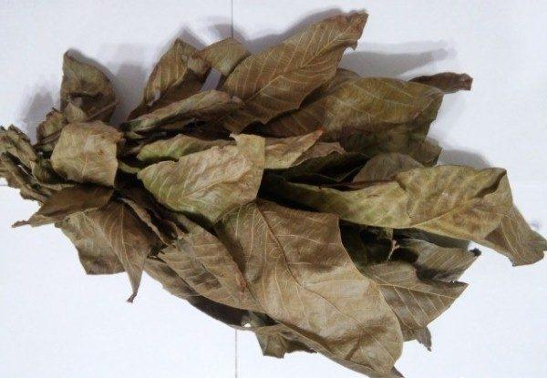 Засушенные листья грецкого ореха