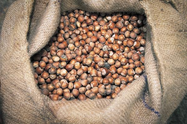 Лесной орех вреден при гипертонии, мочекаменной болезни, индивидуальной непереносимости