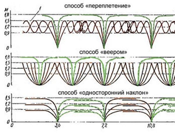 От способа формирования куста зависит схема посадки ежевики