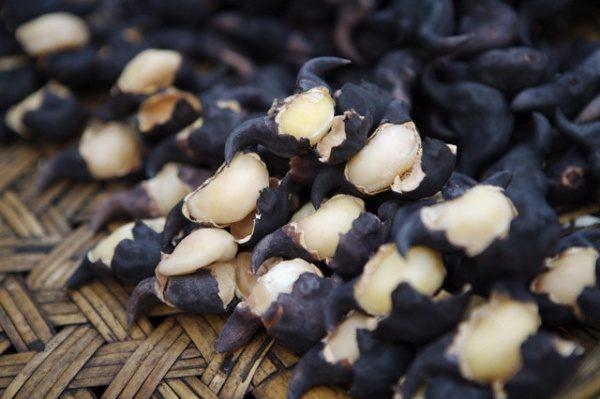 Плоды водяного ореха