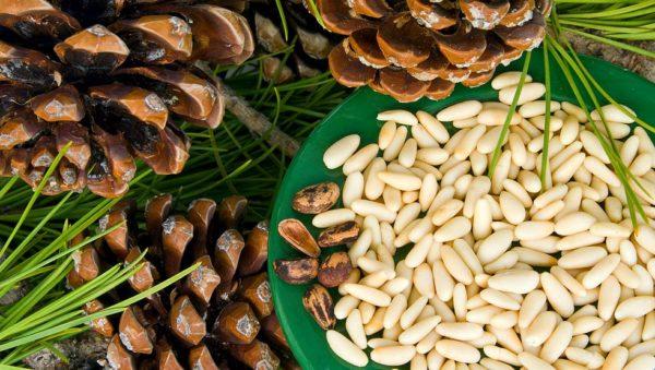 Кедровые орешки, полезные для женского организма