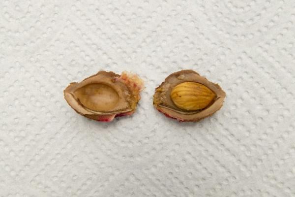 Извлеките семена и положите в теплую воду на 2-3 дня для набухания, после посадки полейте семена и накройте горшки стеклом или полиэтиленовой пленкой
