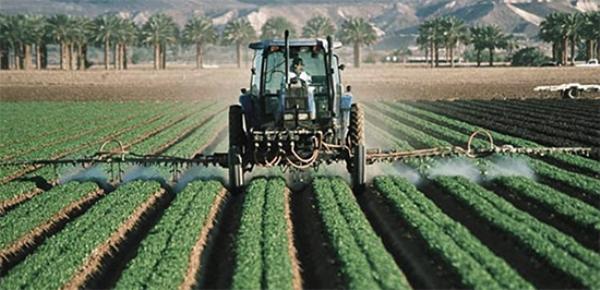 Промышленное выращивание земляного ореха
