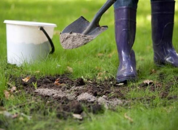 Осенью удобряют комплексными , а весной азотными удобрениями, лучше всего замульчировать почву перегноем