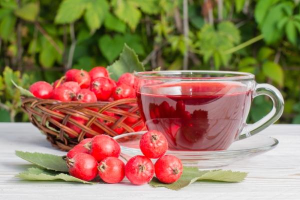 Использование термоса для заваривания плодов боярышника позволяет сохранить максимум полезных веществ