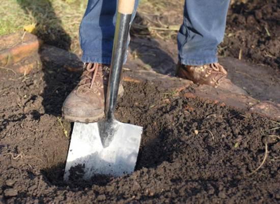 Для посадки смородины нужно приготовить ямку размером 50*50*50 см