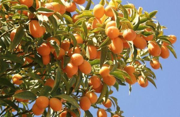 Злоупотребление фруктом может спровоцировать ожирение