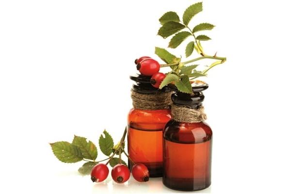 Из семян шиповника изготавливают целебное масло, готовят отвары