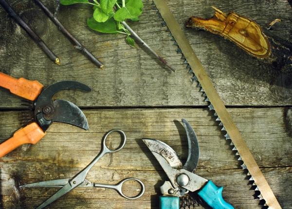 Для обрезки нужны острые нержавые инструменты: ножовка, секатор