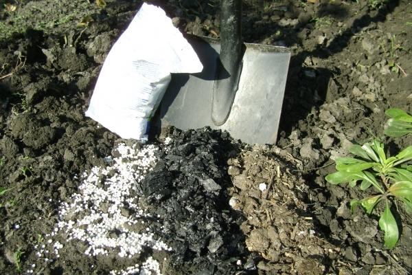 Калийно-фосфорные удобрения вносят под куст смородины осенью, органические используют только весной