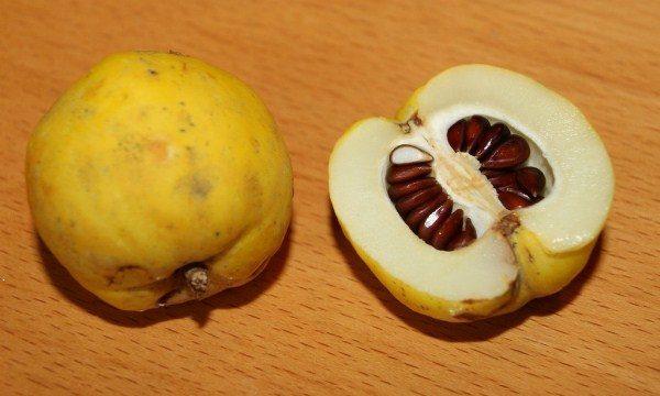 Из семян айвы получают слизь, благоприятно действующую при заболеваниях органов дыхания