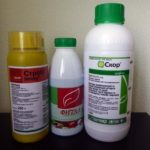 Фунгициды для лечения пятнистости роз