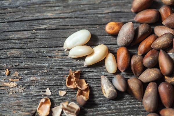 Кедровые орехи: их польза и вред, полезные свойства и противопоказания, применение в народной медицине