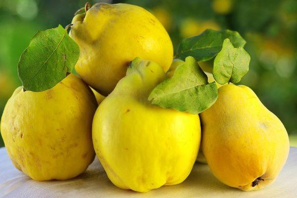 Айву рекомендуется принимать с медом при болезнях желудка и расстройстве печени