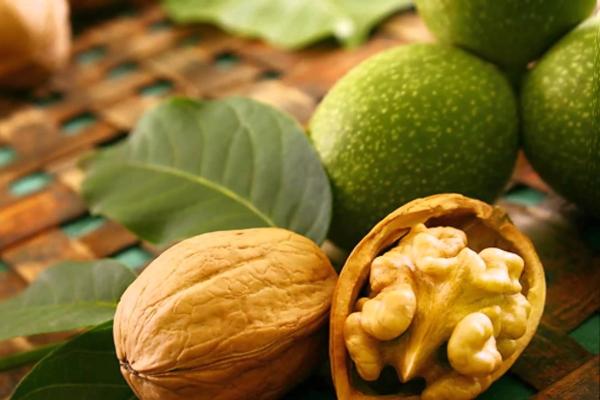 Польза и вред грецкого ореха, рецепты народной медицины