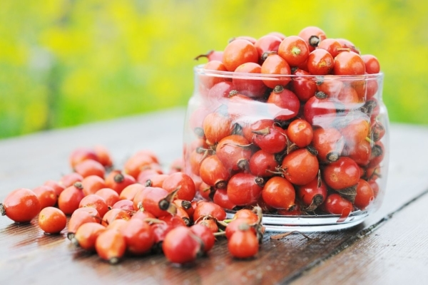 Плоды шиповника - как свежие, так и сушеные - содержат большое количество витамина С