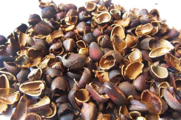 Скорлупа кедрового ореха используется в косметологии и фармацевтике, как удобрение, в народной медицине