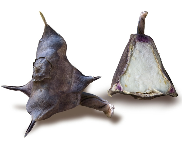 Водяной орех обладает невысокой калорийностью и богатым составом полезных веществ