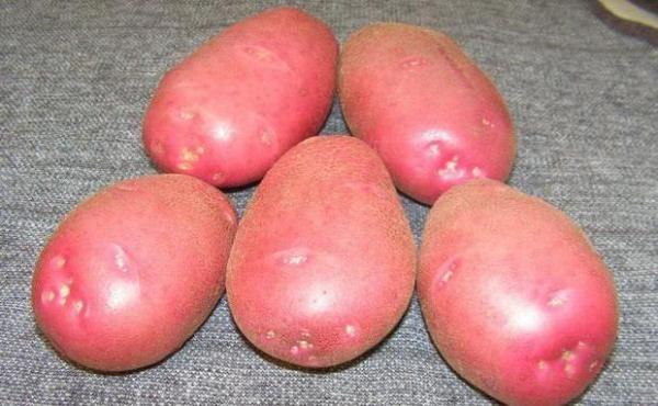 Раннеспелый картофель Любава