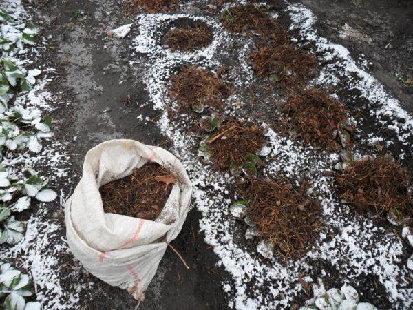 Перед наступлением зимы необходимо использовать укрытие в виде растительной мульчи или агроткани