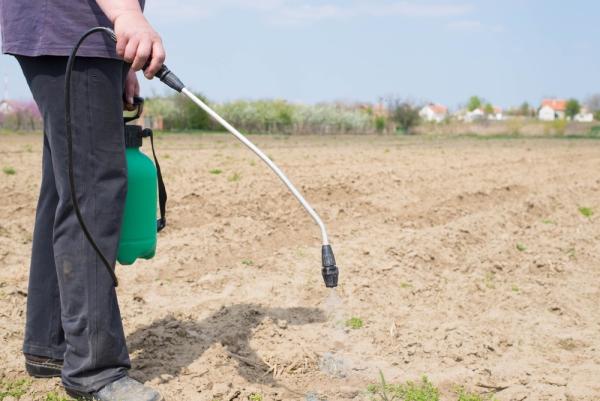 Обработка производится до появления сорной травы на поверхности почвы