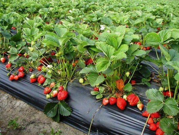 Правильно выбранный участок, позволит получить не только высокий урожай, но и даст возможность предотвращения многих заболеваний