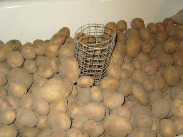 Для того, чтобы урожай картофеля хранился намного дольше, необходимо его хранить в полной темноте при соблюдении температурного режима