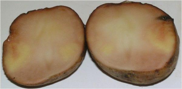 Признаки подмороженного картофеля