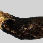 Баклажан, пораженный фитофторозом