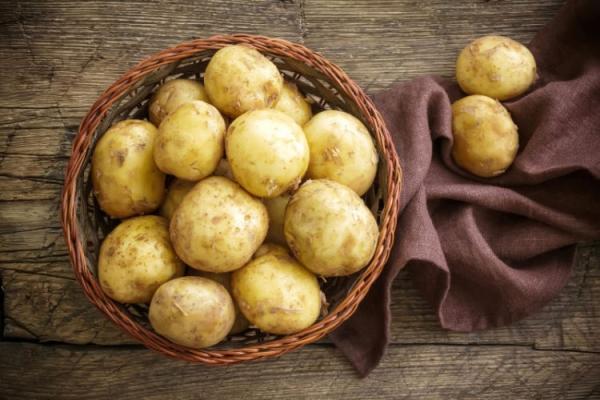 Картофель сорта Санте: описание и характеристика, посадка, уход и хранение