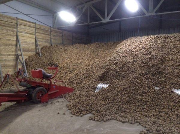 Овощехранилище картофеля